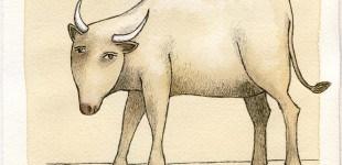birdand-buffalo
