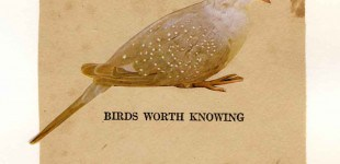 Birds Worth Knowing